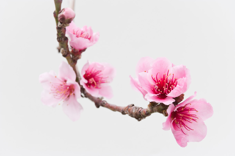 peach blossom Check out peach blossom for the latest trends in wedding favors, baby shower favors, wedding decor, party decorations, corporate gifts, bridal party gifts and gift baskets.